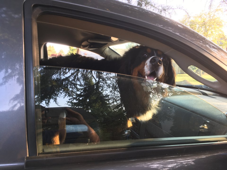 Photo of Winston smiling in the Durango